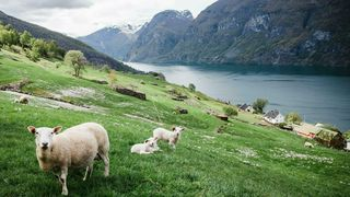 Bare en tredjedel av den dyrkede marka i Norge egner seg til å dyrke matkorn og grønnsaker. Resten er beitemark og andre jordarealer som bare egner seg til å dyrke dyrefôr, skriver innsender.