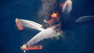 Ti år siden Deepwater Horizon-katastrofen. Dyreliv i området er fortsatt truet