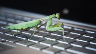 En kneler på et tastatur.