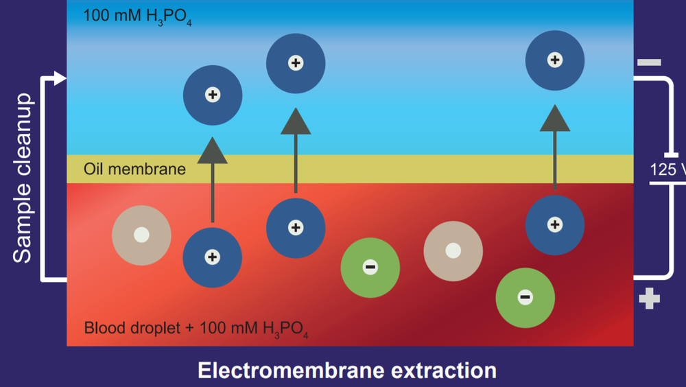 Elektromembranekstraksjon kan beskrives som elektroforese over en tynn oljemembran. Elektroforese er en viktig metode for å skille ulike kjemiske og biokjemiske stoffer fra hverandre.