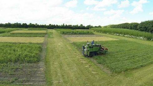 Studie: Hvis gress skal erstatte søramerikansk soya, vil det endre landbruket radikalt