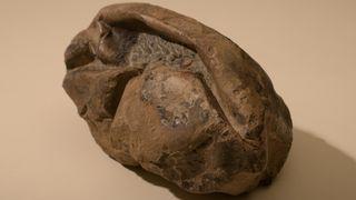 Har forsket på hva det kan være i 10 år: Nå er den mystiske Antarktis-fossilen identifisert som et enormt egg
