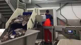 Fikk betalt for å skru av fryseren – Tester nytt marked for å avlaste kraftnettet