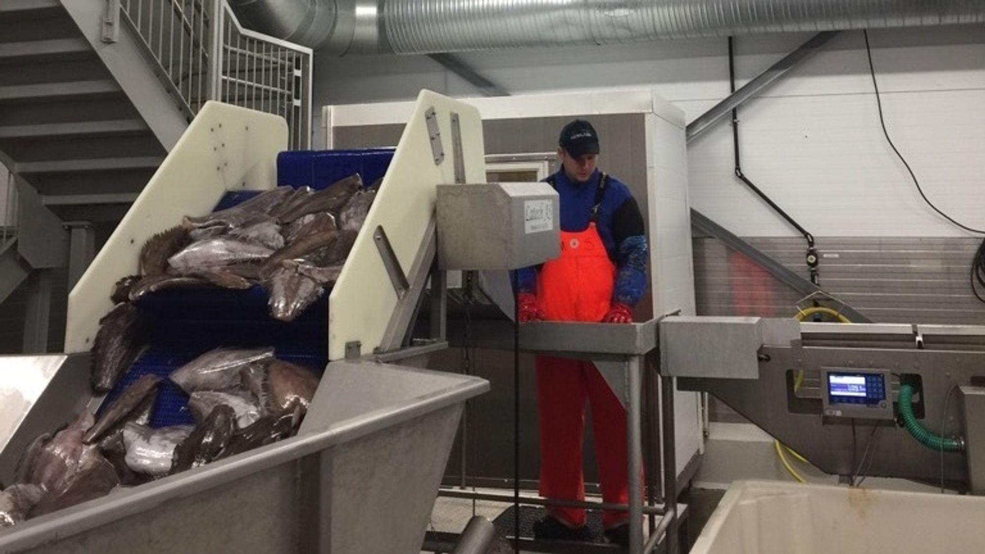 Samlebånd, roboter og store kjølerom trekker mye strøm. Forrige torsdag ble en kompressor i kjølerommet hos Nergård Fisk koblet ut, idet budet fra nettselskapet slo inn på markedsplassen Nodes.