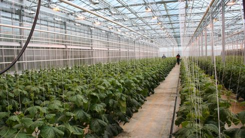 Gartnere rammes av effekttariffer – billigere med gass enn strøm