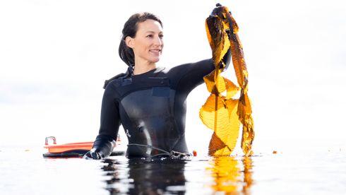 Tare kan bli milliardindustri: Havets grønne gull