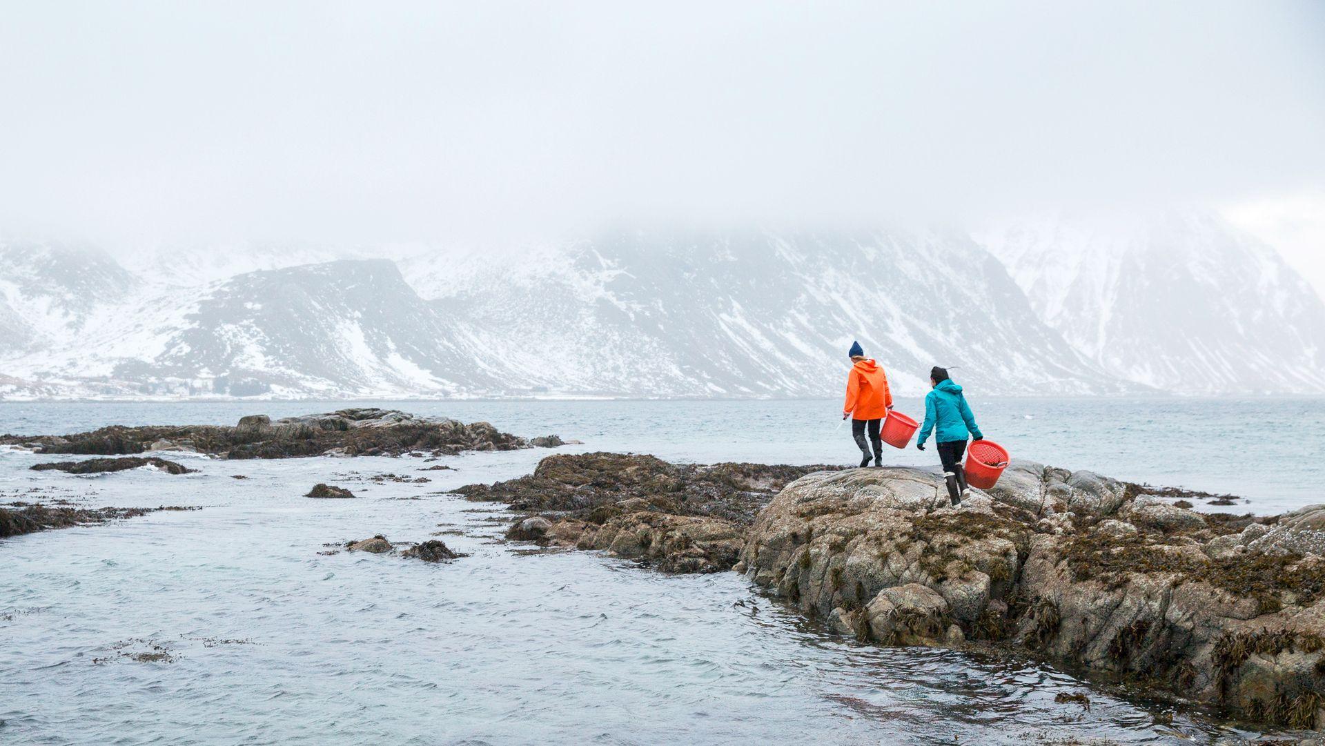 Angelita Eriksen og Tamara Singer høster viltvoksende tang for hånd fra Nettstraumen. Fangsten tørkes, mølles opp og blir til krydderdryss.