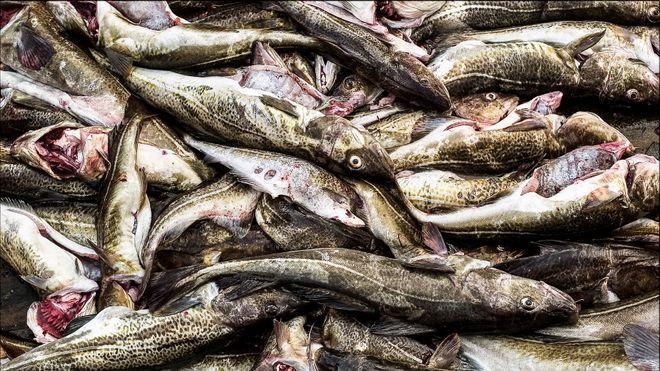Klarer å utnytte hvert eneste gram av fisken