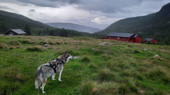 Hunden Zitah, Offerdalen, Indre Sogn, Årdal, vekas foto, porten.no
