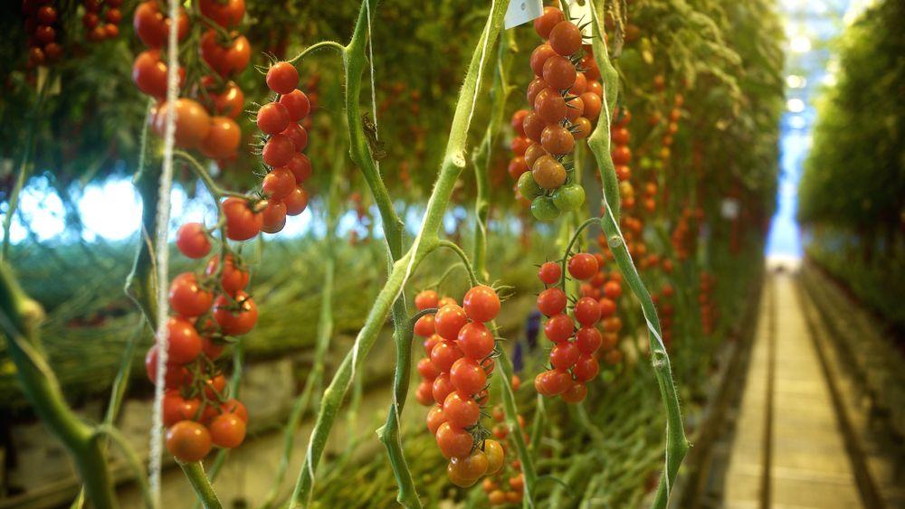 Bergen og mange andre byer kan langt på vei bli selvforsynte med klimanøytrale grønnsaker, mener Ketil Stoknes.
