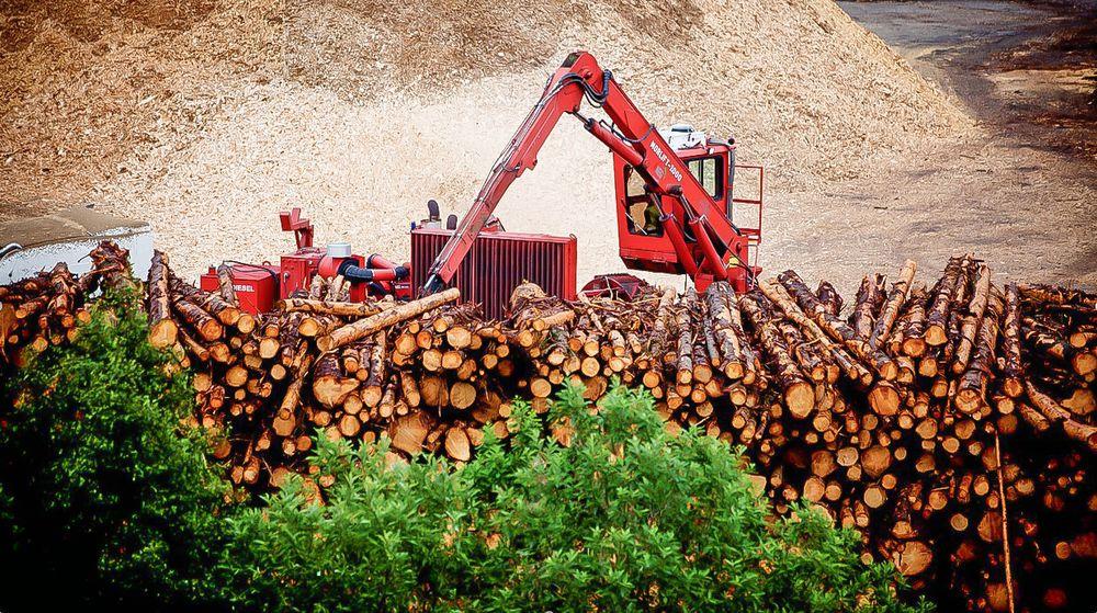Elkem Biocarbon: Skogen er den nye kilden til reduksjonsmidler for Elkems produksjon av silisium og ferrosilisium.