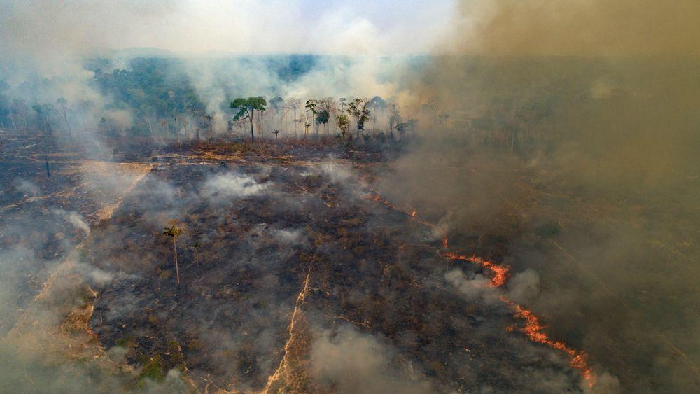 Avskoging og tap av leveområder er blant de største driverne for den pågående naturkrisen i verden. Bildet viser en av de flere tusen brannene som er registrert i Amazonas de siste årene. Amazonas har nå mistet rundt 17 prosent av sitt opprinnelig område, og miljøvernere frykter regnskogen vil nå et vippepunkt i løpet av de neste 15–30 årene hvor den ikke klarer å generere nok regn til å bestå.
