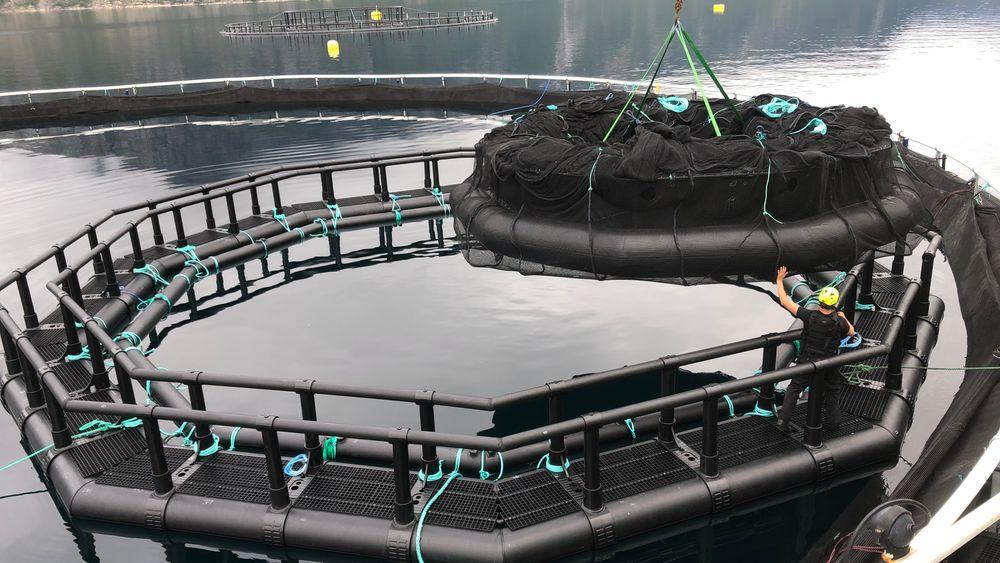 iFarm skal bruke sensorer til å gjenkjenne hver enkelt fisk.