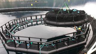 Denne merden behandler 150.000 fisk individuelt