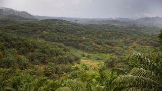 Kongsberg-satellitter skal overvåke global avskoging