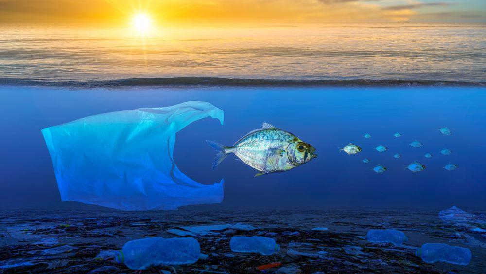 Marinbiolog vil avlive populær myte: Mikroplast er ikke en miljøkatastrofe
