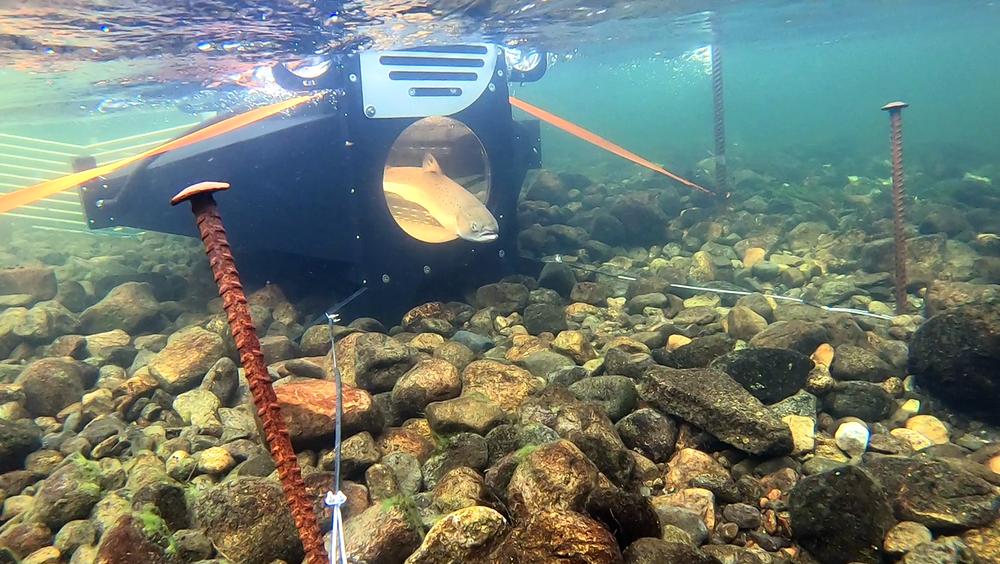 Den vesle teknologibedriften Submerged har laget fotoboksen for laks som i august blei installert i Etne-elva.