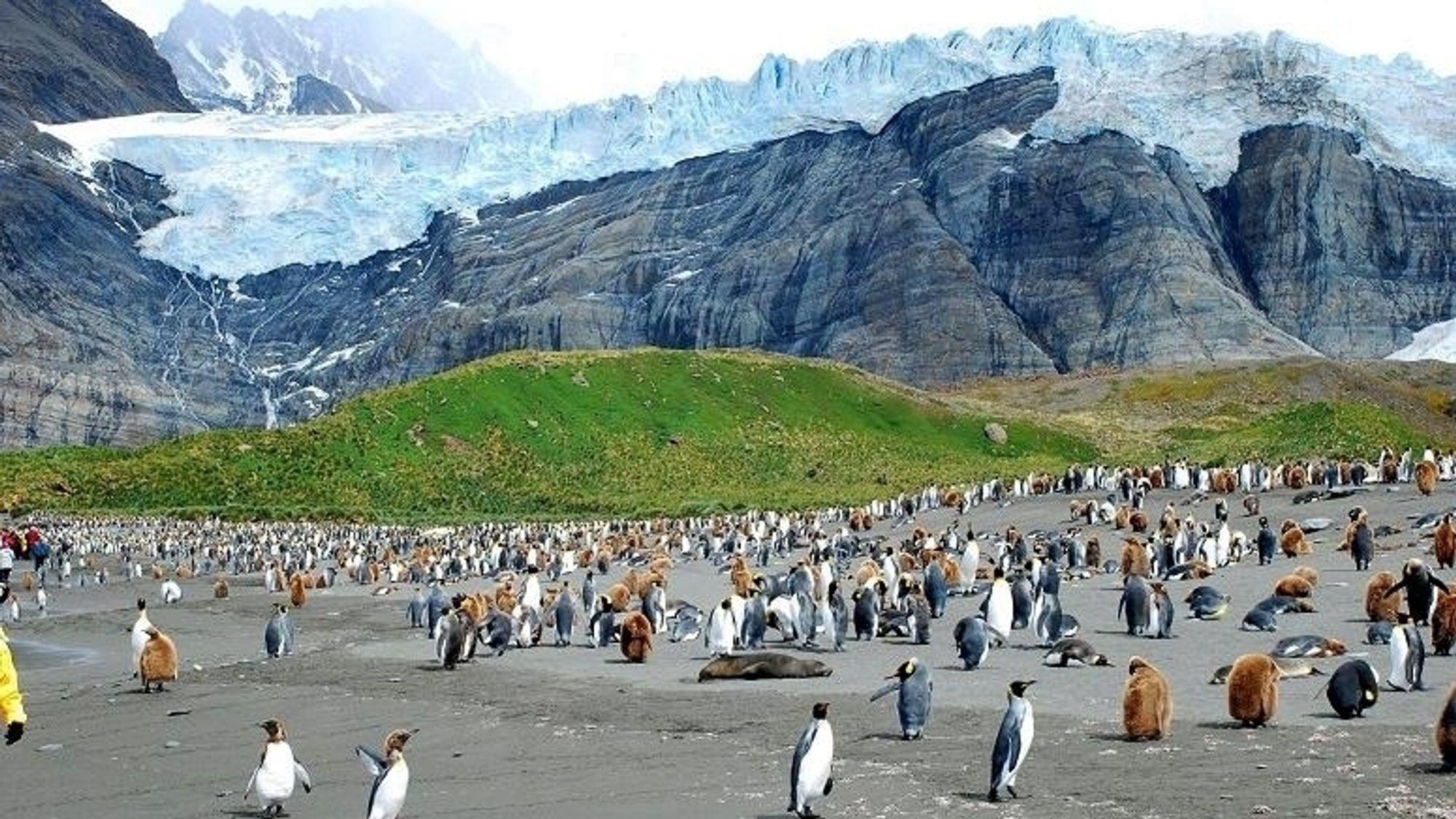 Et gigantisk isfjell truer dyrelivet i Sør-Georgia på De britiske øyer.
