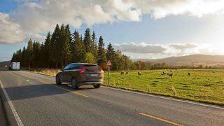 Dyrere driftskontrakter går utover veivedlikeholdet i Trøndelag