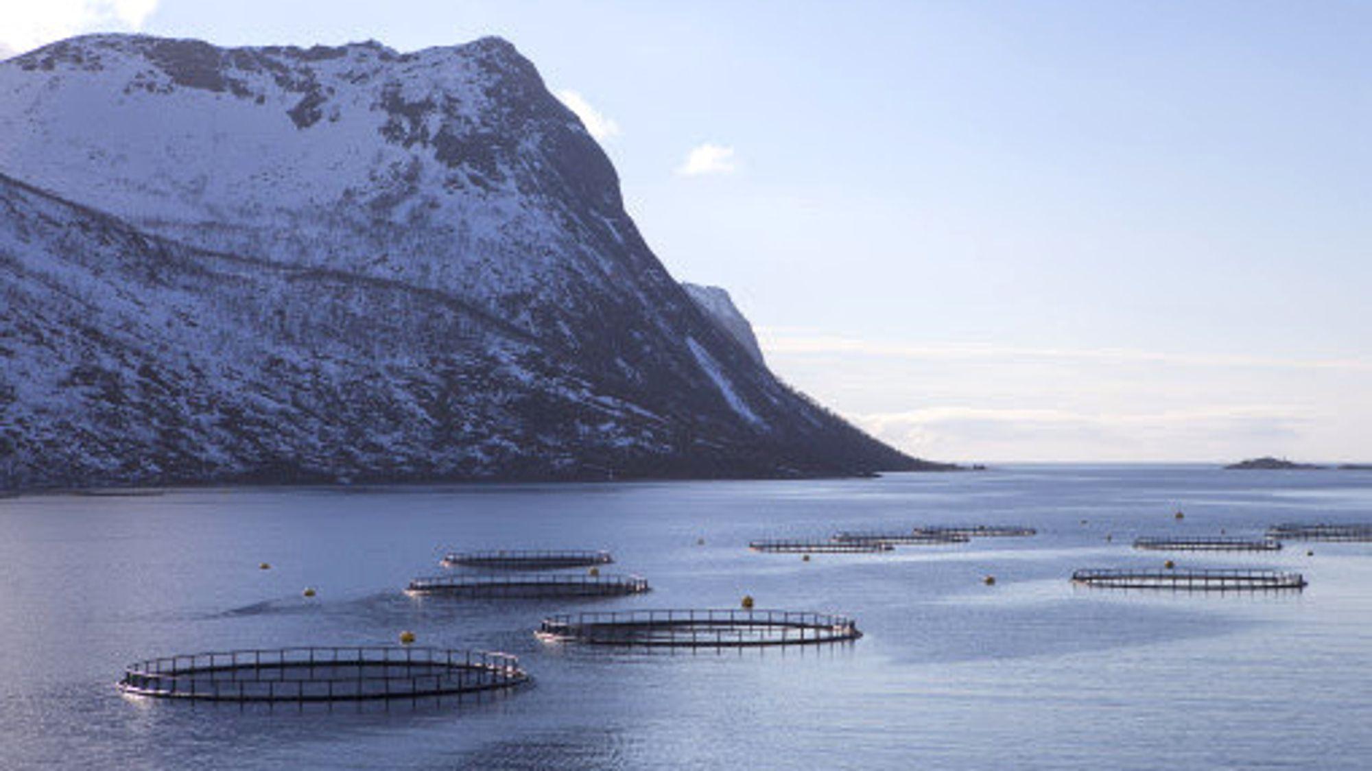 •Marine næringsparker vil gi nye muligheter for samhandling til havs og la oss utnytte arealer og ressurser bedre, samtidig som andre områder frigis til andre aktiviteter, skriver artikkelforfatterne.