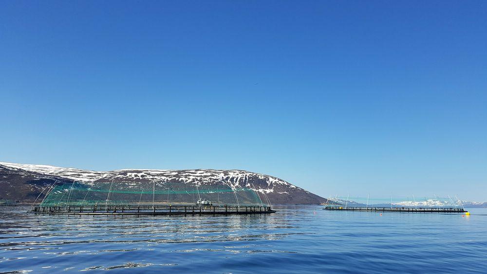 ABB elektrifiserer arbeidsbåt for en av verdens første oppdrettsanlegg for torsk