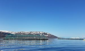 Arbeidsbåt for torskeoppdrett utenfor Frøya blir helelektrisk
