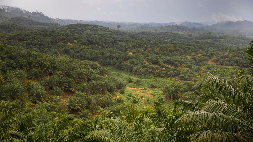 Verdens bestand av naturressurser er kraftig redusert. Bildet viser en av  Indonesias siste regnskognomader. Den er svært sårbar og trues av avskoging, som foregår i stor skala.
