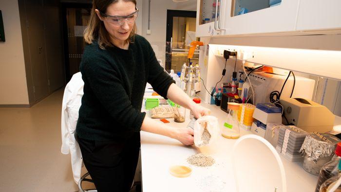 Bakteriebasert betong består av sand, finmalt kalkstein og to spesielle bakterier, samt vann, urinstoff og næring til bakteriene. Her er Simone Balzer Le i laben.