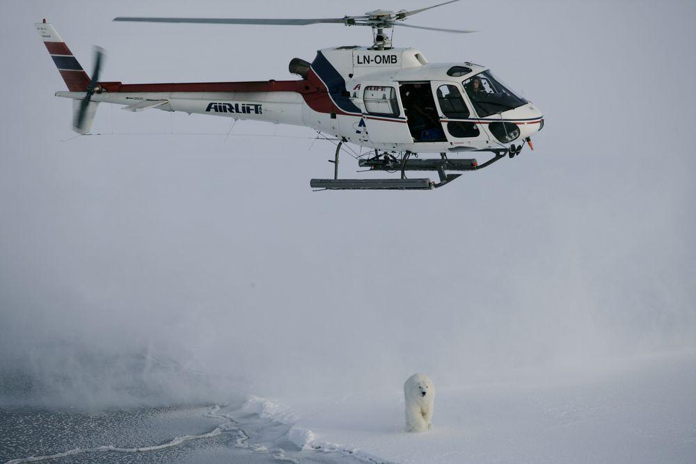 AS350B2-helikopteret LN-OMB og isbjørnbinna N23732 i 2007.