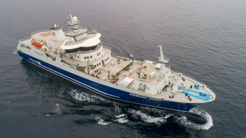 Norwegian Gannet, Hav Line slakteskip for laks og ørret.