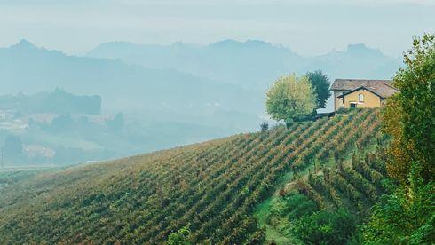 Når klimaendringer truer noen av verdens beste vinområder, kan teknologi spille en avgjørende rolle