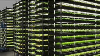 Nordic Harvest ligger i et lager i Taastrup nær København, der spinat, mynte og andre urter dyrkes i store hyller med kunstig belysning og algoritmekontroll av en rekke parametere.