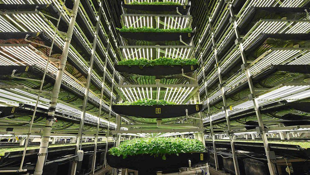 Vertikalt jordbruk i utvikling: Uten automatisering måtte de hatt 150 ansatte – i dag har de 15