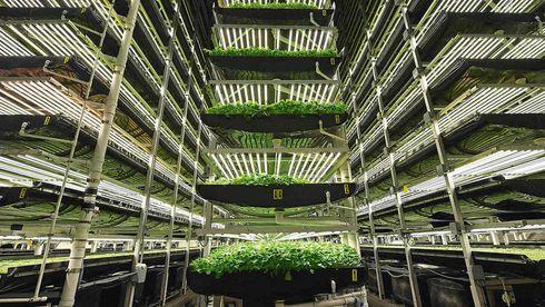 Vertikalt jordbruk på fremmarsj: Her kutter de behov for 135 ansatte med automatisering