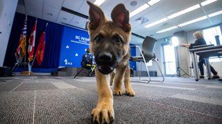 Her trener de opp narkotikahunder til å lukte koronasmitte