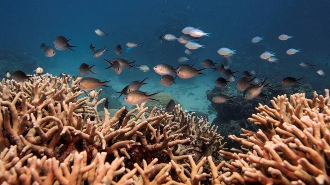 Forskere bruker 3D-utskrift for å gjenoppbygge utsatte korallrev