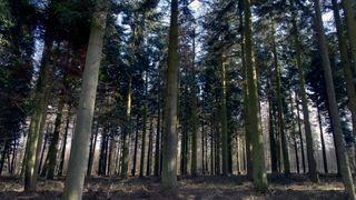 Tar oppgjør med forskere: – Nei, gammel urørt skog tar ikke opp nok CO2