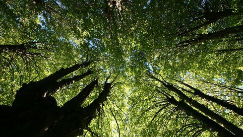 Flere selskaper bruker planting av skog som kompensasjon for utslipp: Forsker-gruppe slår alarm