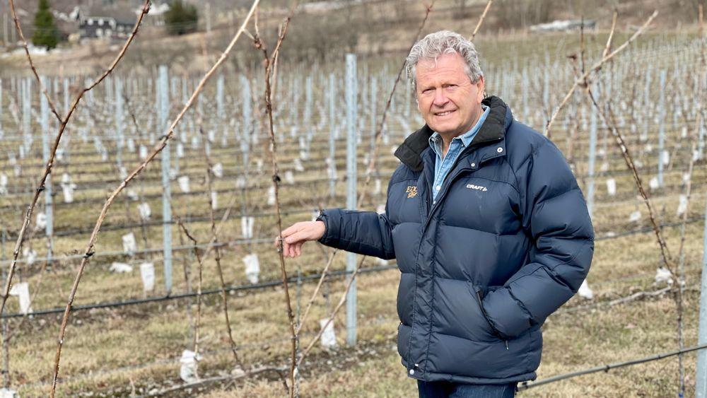 Her har Marius Egge plantet riesling. – Vi må fortsette å utforske mulighetene, sier Marius Egge, etter å ha lykkes med hybridplanter.