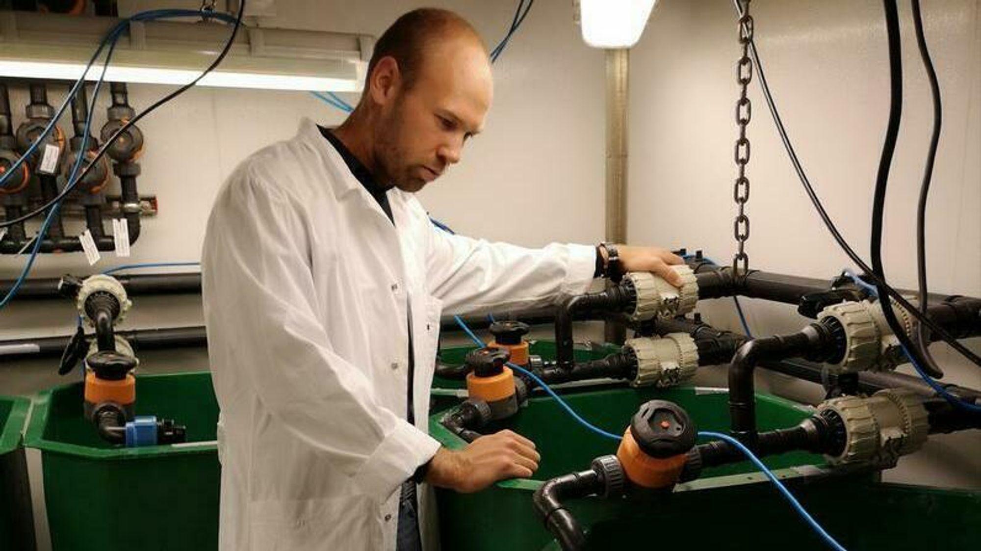 Tarald Kleppa Øvrebø, daglig leder i Shrimp Vision, vil bruke spillvarme fra industrien til å drive oppdrett av tropiske reker i Norge.
