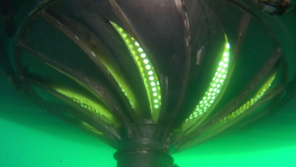 Bildet viser sluken under det lukkede anlegget.