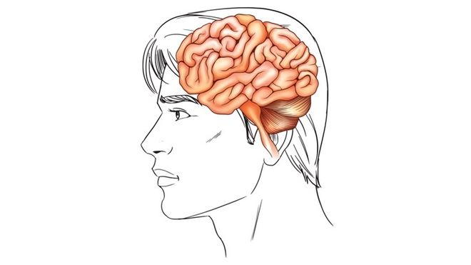 Tegning av hode med hjerne.