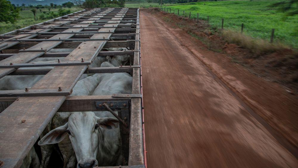 Avskogingen i Brasil øker. Økende bruk av lær i bilseter, må ta sin del av skylden.