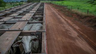 Rekordhøy avskoging i Amazonas. Bilindustrien får del av skylda