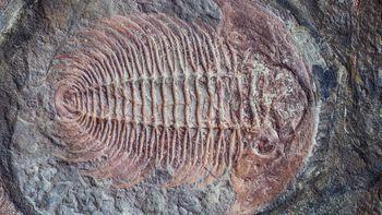 Et eksempel på sakte evolusjon er trilobittene. De endret seg lite gjennom millioner av år.