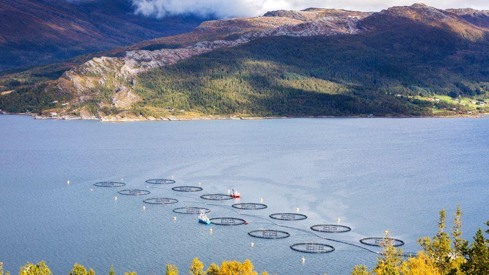 Digitale verktøy vil bidra til mer bærekraftig oppdrett av fisk, både når det gjelder plassering av merder og utvikling av nye produksjonsmetoder, skriver artikkelforfatterne. Dette anlegget ligger i Sjona på Helgelandskysten.
