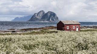 Illustrasjonsbilde. Både Telia og Telenor rapporterer om at stadig flere nordmenn velger fast trådløst bredbånd med egen antenne for å få stabilt nett og ubegrenset databruk på hytta.