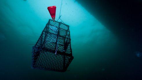 Norsk teknologi skal gjøre fiske mer bærekraftig
