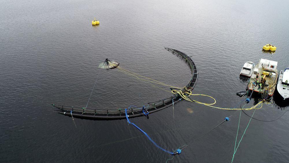 Atlantis Subsea Farming er blant selskapene som har testet nedsenkbare merder.