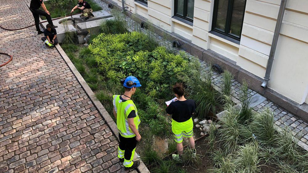 En årsak til at nedbør forårsaker stadig større skader, er økt fortetting og flere harde flater. I Deichmans gate i Oslo sentrum skal dette regnbedet bidra til å holde kontroll på overvannet.